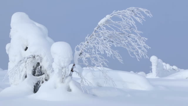 snödrivor och tunna träd. sömlös loop - djupsnö bildbanksvideor och videomaterial från bakom kulisserna