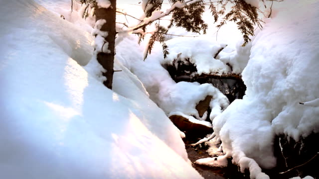 Snowdrifts in the forest, beautiful winter. video