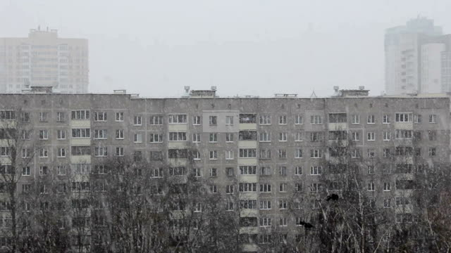 Snowfall in city on the background of multi-storey houses and trees