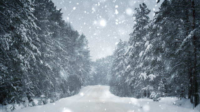 Snowfall in forest landscape