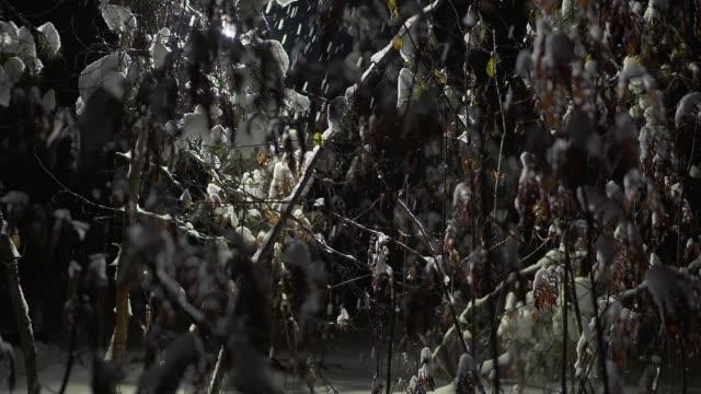 夜の森の降雪。 - 霜点の映像素材/bロール