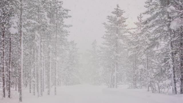 snöfall i norra skogen - finland bildbanksvideor och videomaterial från bakom kulisserna