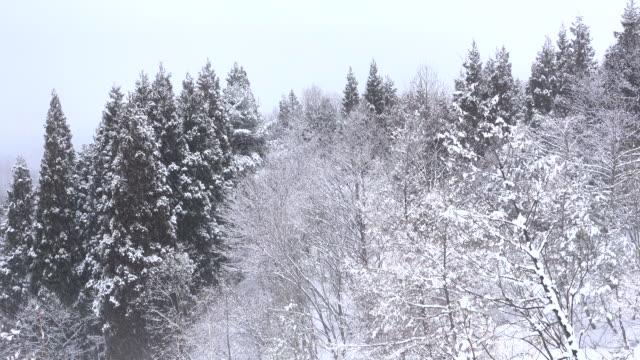 snöfall i skogen - djupsnö bildbanksvideor och videomaterial från bakom kulisserna