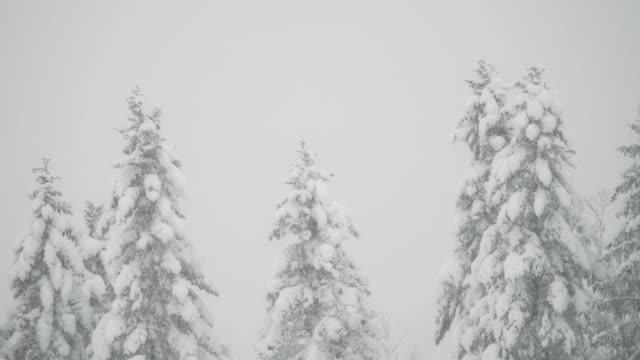 снегопад на дефокусированном ландшафте - центральная европа стоковые видео и кадры b-roll