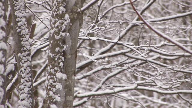 Snowfall on the tree in Mt.Hakkoda,Aomori,Japan video