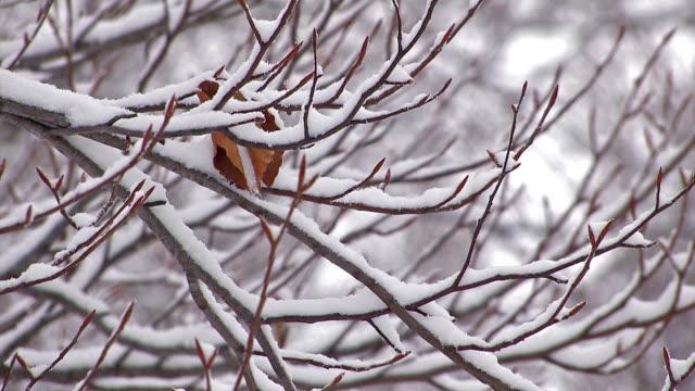 schneefall auf dem baum in mt.hakkoda, aomori, japan - laub winter stock-videos und b-roll-filmmaterial