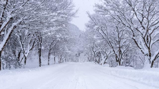 vídeos de stock e filmes b-roll de snowfall on winter road. - inverno