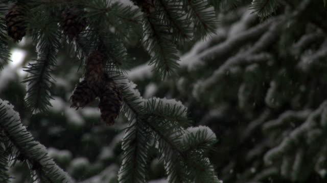 Snowfall past pine cones 2 video
