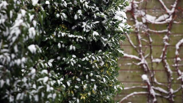 nevicata - giardino pubblico giardino video stock e b–roll