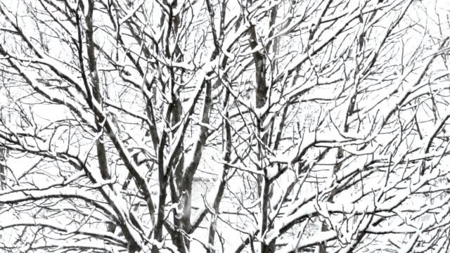 Snowfall video