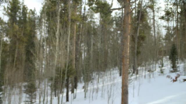 vídeos de stock, filmes e b-roll de flocos de neve e rajadas de vento em aspen frio inverno floresta - condado de pitkin
