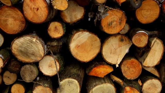 hd super slow-mo: snowflakes and woodpile - gren plantdel bildbanksvideor och videomaterial från bakom kulisserna