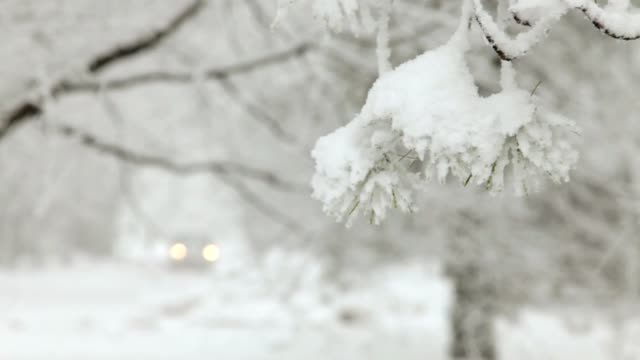 Snowing Blizzard, Pine Tree, with Car Headlights Approaching (Video) video