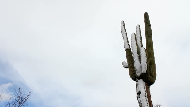 Snowing On Saguaro video