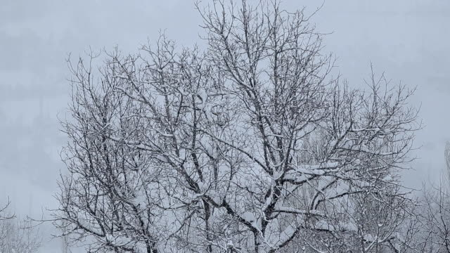 snowing on tree