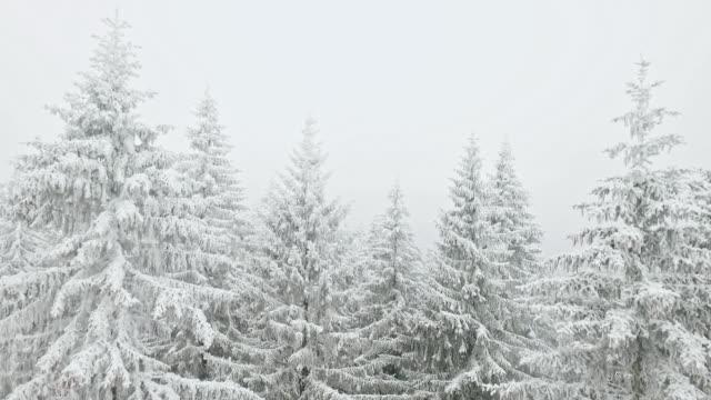 stockvideo's en b-roll-footage met sneeuwt over de winter-bos - sneeuwkap