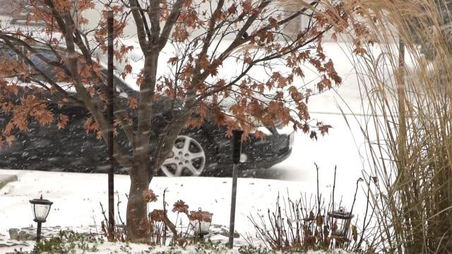 schneesturm in toronto - laub winter stock-videos und b-roll-filmmaterial