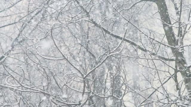 śnieżyca tle - polska filmów i materiałów b-roll