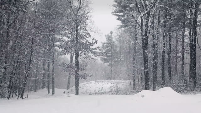 Snowstorm in Woods Locked Down video