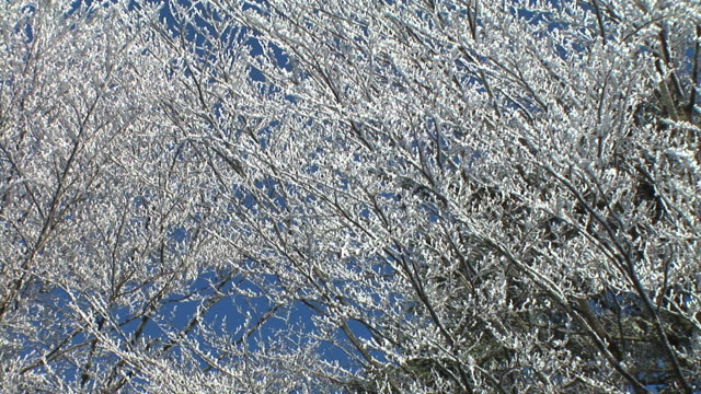 HD: Snowy branches. video