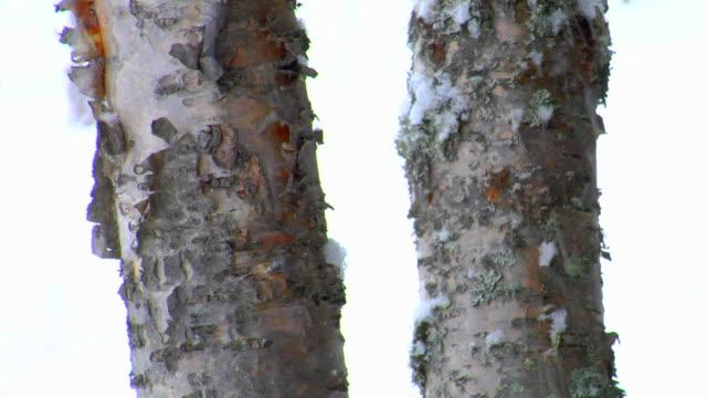 stockvideo's en b-roll-footage met snowy day 04 - boomstam