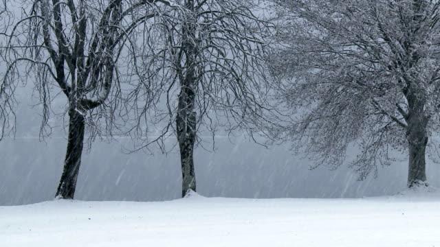 HD: Snowy day video