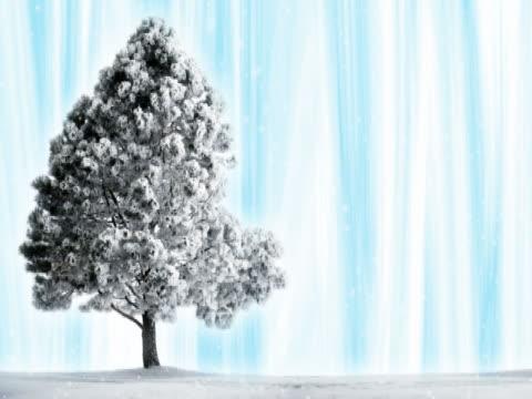 pino sulla neve ghiaccio blu delle tende - pinacee video stock e b–roll