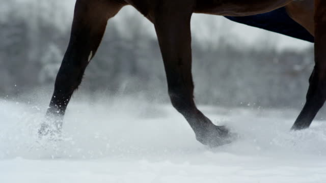 SLOW MOTION: Snowy horses legs rising snow while running in deep snow blanket video