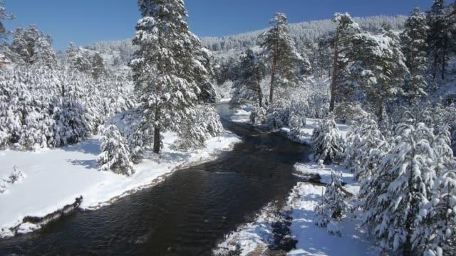 snowy mountain aerials - хвойное дерево стоковые видео и кадры b-roll