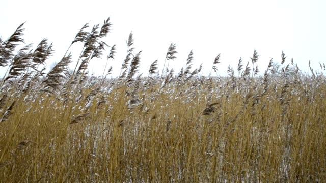 ユキコリード - 湿地草点の映像素材/bロール