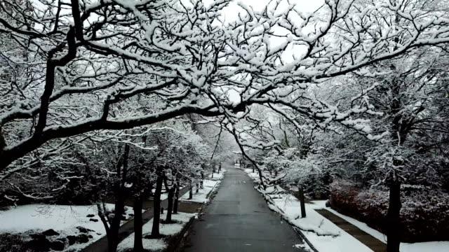Snowy Residential Avenue - video