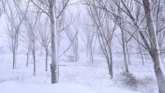 Snowy trees and landscape at snowstorm video