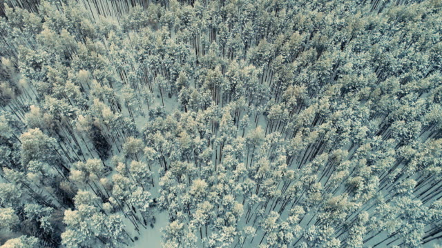 Snowy trees from above. Epic winter forest. Aerial shot. Snowy trees from above. Epic winter forest. Aerial shot. 4K siberia stock videos & royalty-free footage