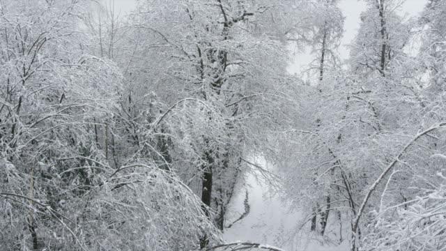 AERIAL: Snowy trees video
