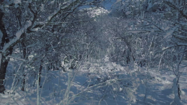 Snowy trees video