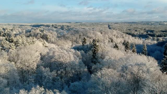 schneebedeckter winterwald verkiai regionalpark, vilnius, luftfahrt - litauen stock-videos und b-roll-filmmaterial