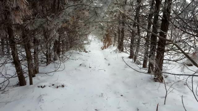 Snowy winter in forest. video