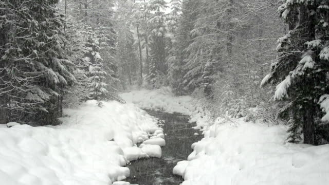 Snowy Woods And River video
