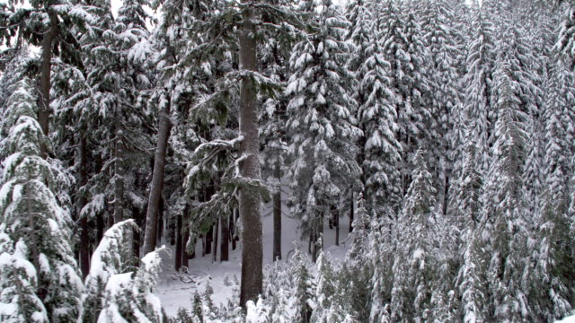 Snowy Woods video