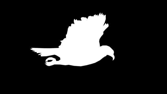 Soaring Eagle (Loopable) video