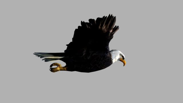 Soaring Eagle with Alpha Channel (Loopable) Design Element eagle bird stock videos & royalty-free footage