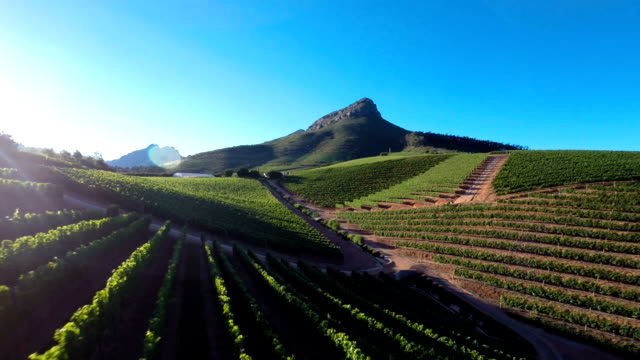 Soaring over vineyards Aerial drone footage of vineyards in the Winelands of the Western Cape, South Africa western cape province stock videos & royalty-free footage