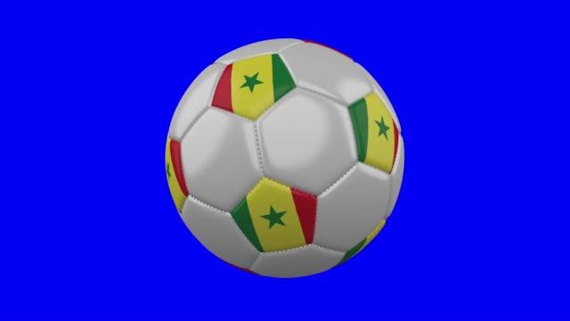 soccer ball with senegal flag on blue chroma key background, loop - dakar video stock e b–roll