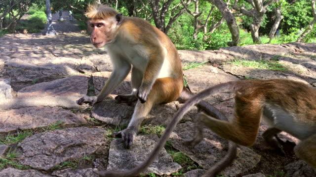 Soziale Pflege von Affen – Video
