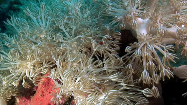 Soft coral on background sea bottom underwater in Red Sea.