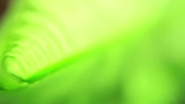 Soft Defocused Fresh Green Background (Real time HD)