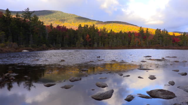 Soft light on a small pond in the White Mountains video
