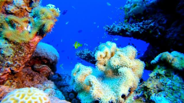 軟硬珊瑚五顏六色的魚。 - 氧氣筒 個影片檔及 b 捲影像