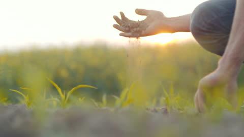 vídeos de stock e filmes b-roll de soil, agriculture, - farmer hands holding and pouring back organic soil. - agricultor