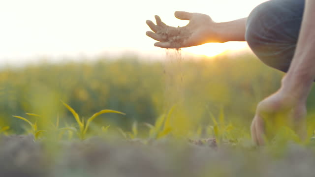 vídeos de stock e filmes b-roll de soil, agriculture, - farmer hands holding and pouring back organic soil. - hand